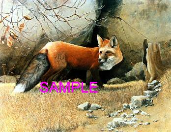 Red Fox by William Carl Bell